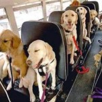 Cobb County Dog Bus