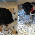 Gwinnett two puppies 10082012
