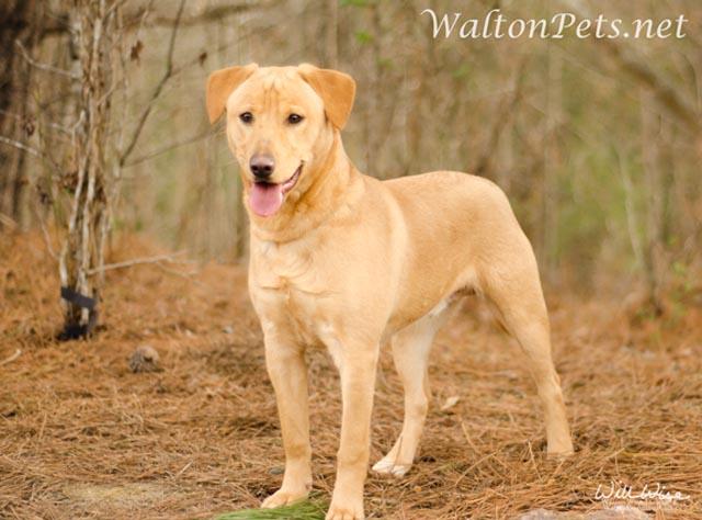 WaltonSport1