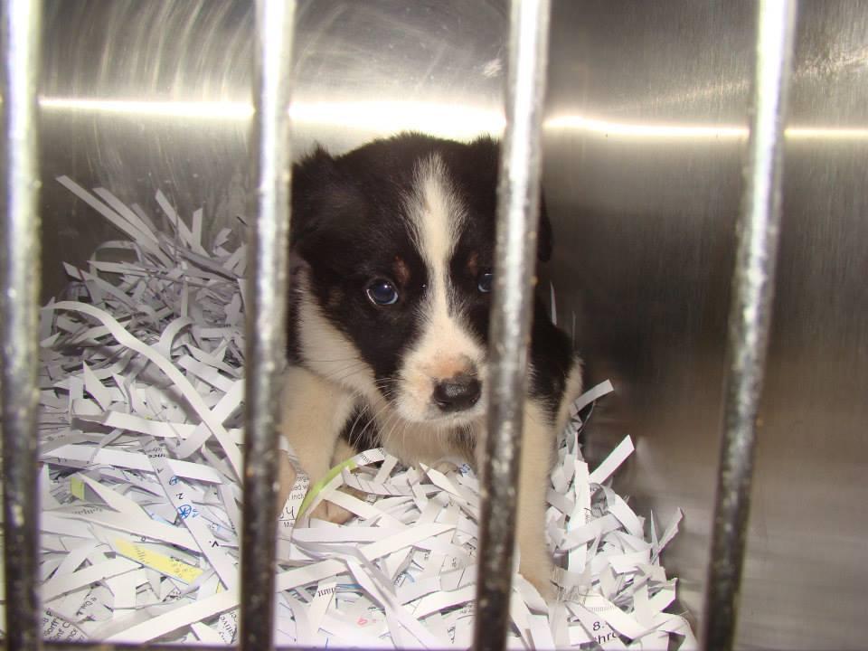 Barrow Oreo Puppy