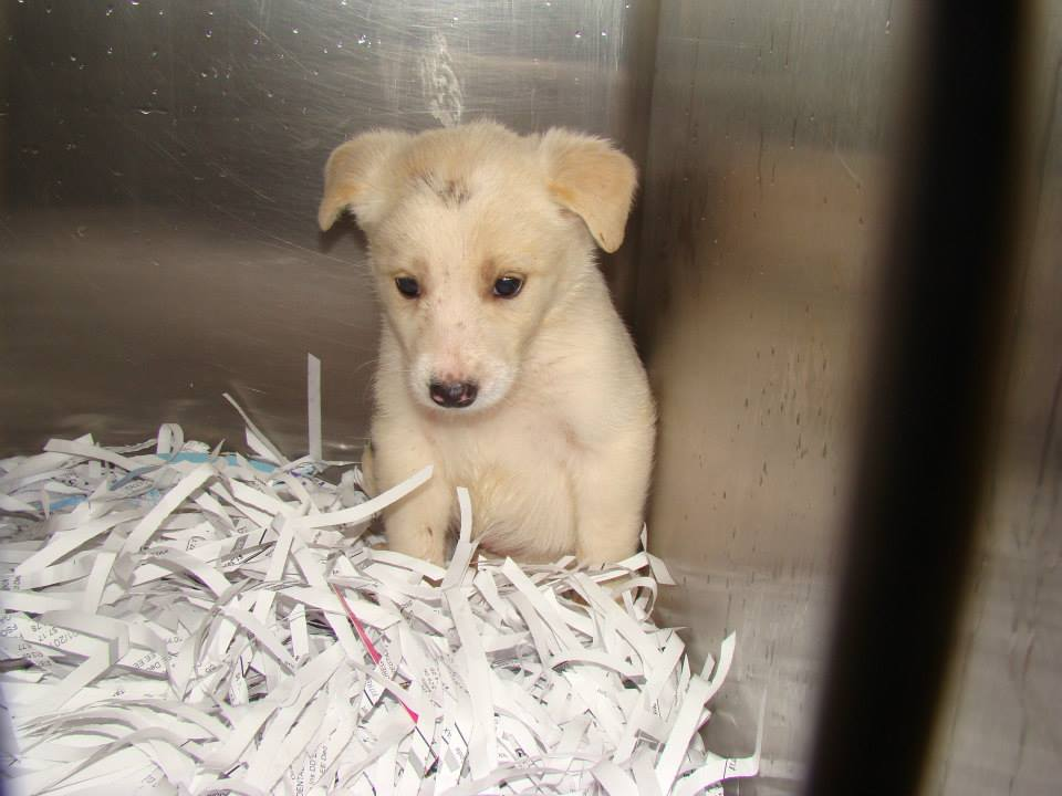 Barrow White Puppy2