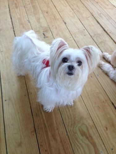 Gwinnett County Humane Society Dogs For Adoption
