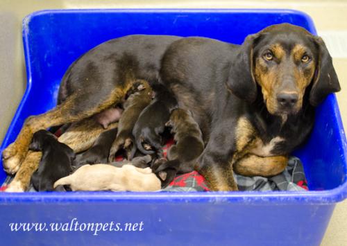 Walton Bessie Puppies
