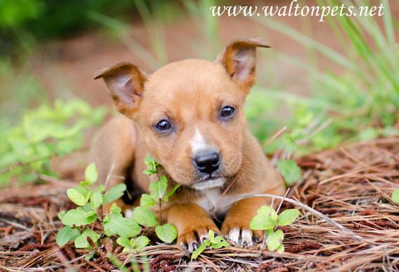Adoptable Georgia Dogs For June 10 2013 Georgia