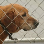 Adoptable Georgia Dogs for March 4, 2013