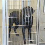 Adoptable Georgia Dogs for May 18, 2013