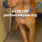 Adoptable Georgia Dogs for May 23, 2013