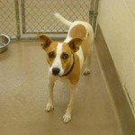 Adoptable Dogs for February 26, 2013