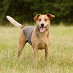 Adoptable Georgia Dogs for May 9, 2013