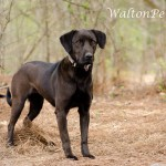 Adoptable Georgia Dogs for April 9, 2013