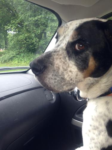 Louis Hound dog