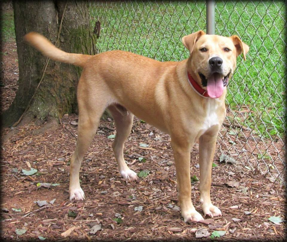 Madison County Ga Dog Rescue
