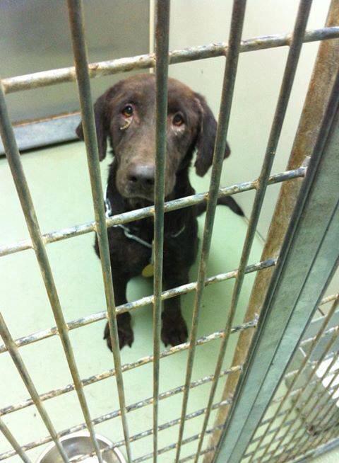 Dog Rescue In Valdosta Ga