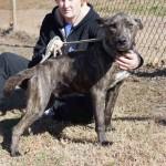 Adoptable Georgia Dogs for December 3, 2013