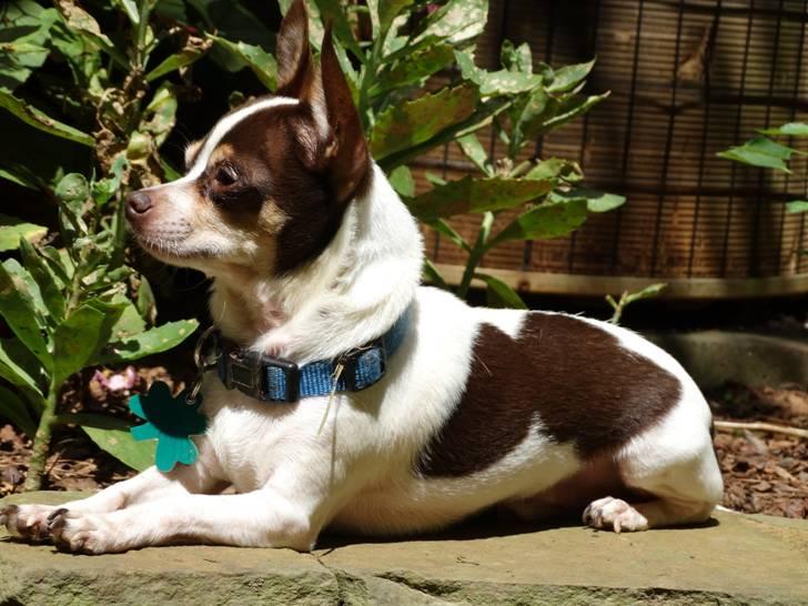Lee County Humane Society Adoptable Dogs
