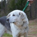 Adoptable Georgia Dogs for January 29, 2014