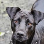 Adoptable Georgia Dogs for February 26, 2014