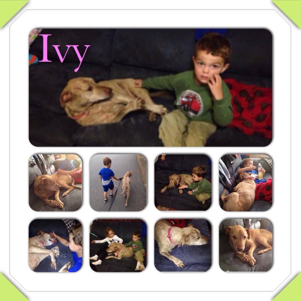 Dixie Ivy