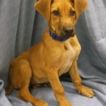 Adoptable Georgia Dogs for February 24, 2014