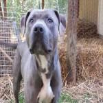 Adoptable Georgia Dogs for April 14, 2014