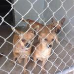 Adoptable Georgia Dogs for April 28, 2014