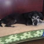 Adoptable Georgia Dogs for April 29, 2014