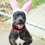 Adoptable Georgia Dogs for April 16, 2014