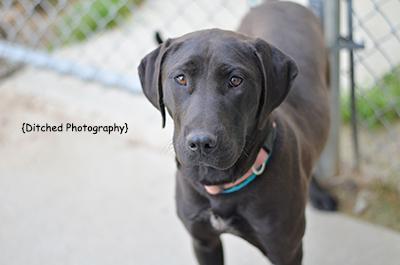 Photos Of Adoptable Dogs At Animall Control Center Columbus Ga