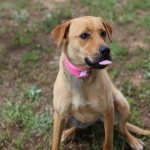Adoptable Georgia Dogs for May 16, 2014