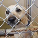 Adoptable Georgia Dogs for May 29, 2014