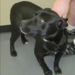 Adoptable Georgia Dogs for May 27, 2014