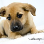 Adoptable Georgia Dogs for May 15, 2014