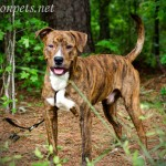 Adoptable Georgia Dogs for May 2, 2014