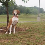Adoptable Georgia Dogs for June 4, 2014