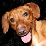 Adoptable Georgia Dogs for June 5, 2014