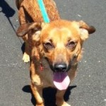 Adoptable Georgia Dogs for June 30, 2014