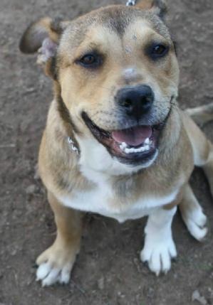 Small Dog Humane Society Alpharetta