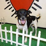 Adoptable Georgia Dogs for July 24, 2014