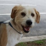Adoptable Georgia Dogs for July 21, 2014