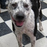 Adoptable Georgia Dogs for July 16, 2014