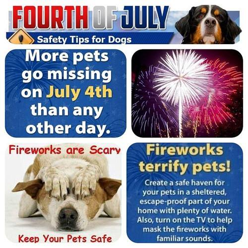 Fourth July Dogs
