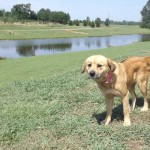 Adoptable Georgia Dogs for July 31, 2014