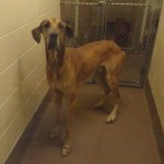 Adoptable Georgia Dogs for July 9, 2014
