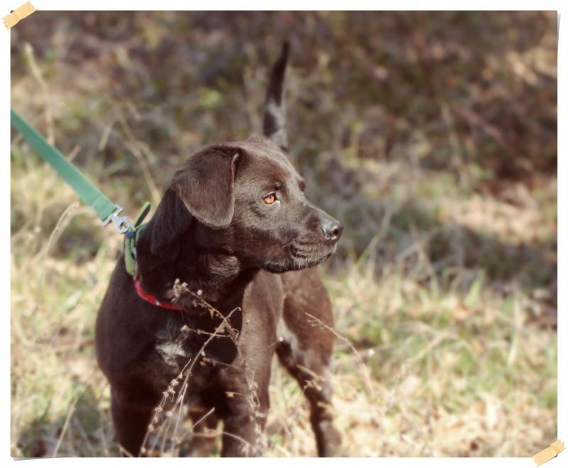 Adoptable Dogs In Hamilton