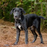 Adoptable Georgia Dogs for July 17, 2014