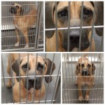 Adoptable Georgia Dogs for August 12, 2014