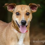 Adoptable Georgia Dogs for August 13, 2014