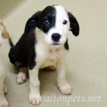 Adoptable Georgia Dogs for August 6, 2014