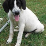 Adoptable Georgia Dogs for July 28, 2014