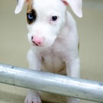 Adoptable Georgia Dogs for August 20, 2014